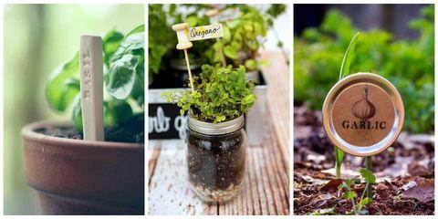 Green, Leaf, Ingredient, Herb, Annual plant, Houseplant, Herbal, Flowerpot,