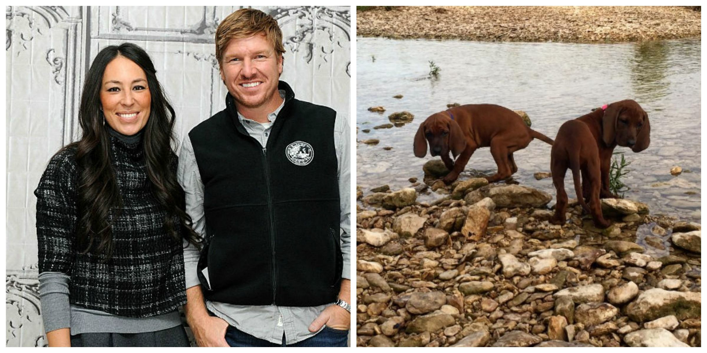 Chip And Joanna Gaines Get Two Redbone Hound Puppies Kittens Pets