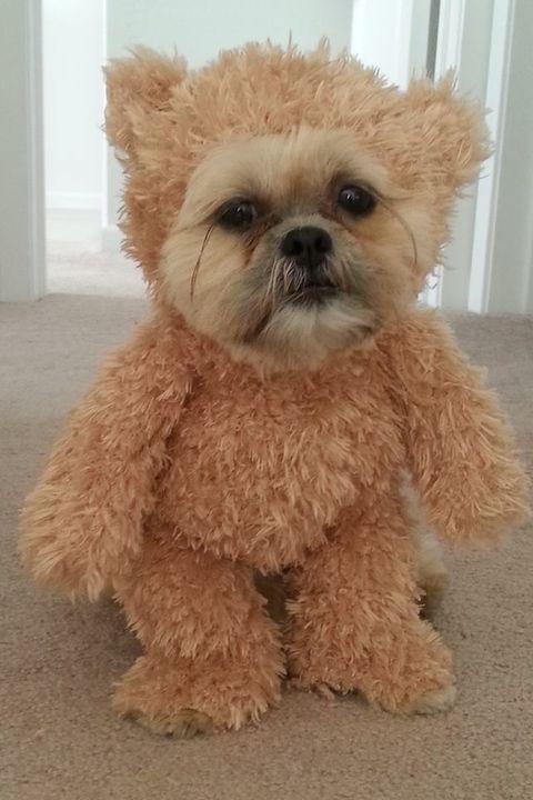 Tiny Dog Halloween Costumes.62 Best Dog Costume Ideas Diy Pet Halloween Costumes
