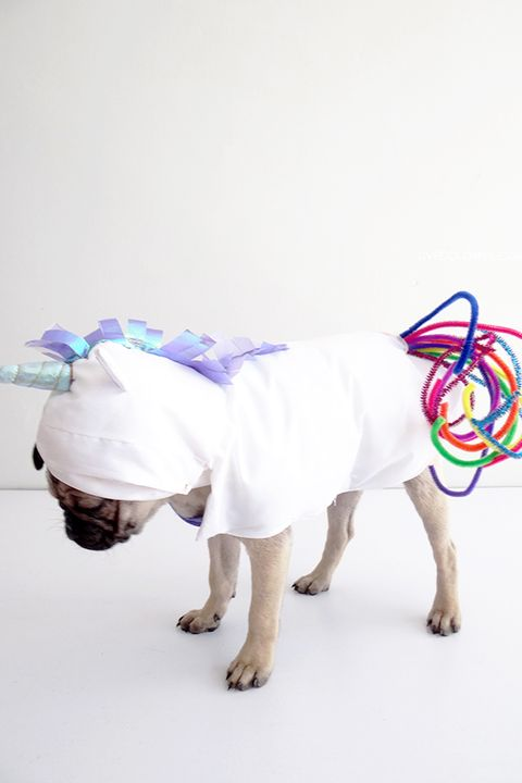 32 cute pet costumes for dogs cats best halloween pet costume ideas do it yourself unicorn costume solutioingenieria Image collections