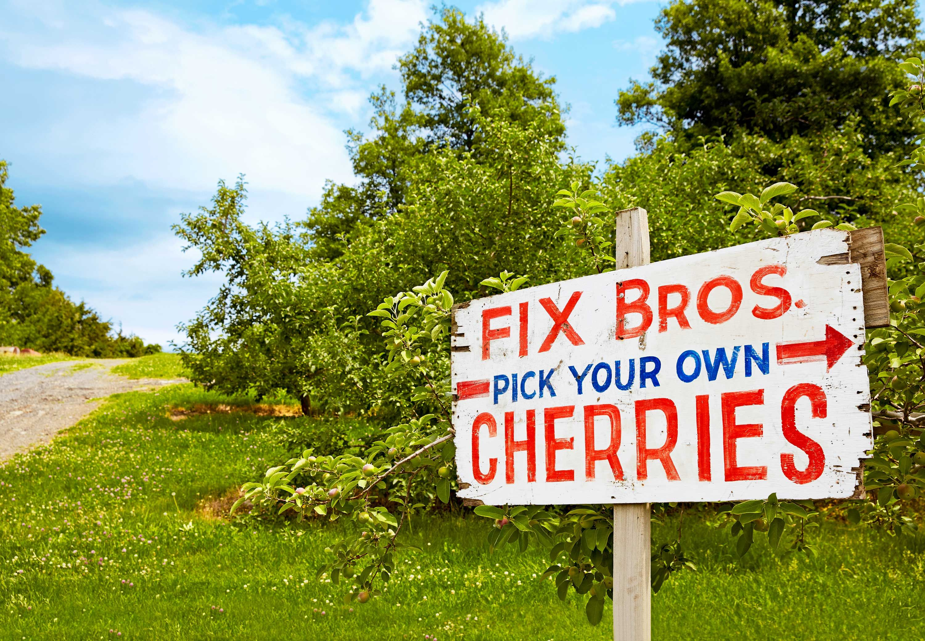 10 Best Places To Pick Your Own Cherries U Pick Cherries