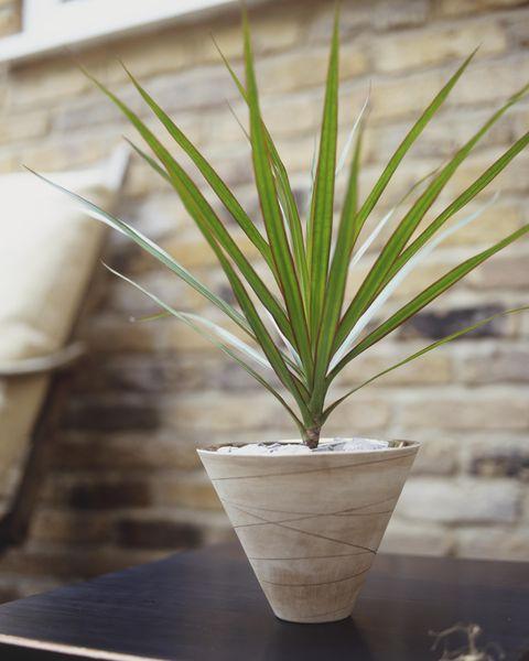 flowerpot, leaf, terrestrial plant, houseplant, hardwood, plywood, plant stem, still life photography, vase, pottery,