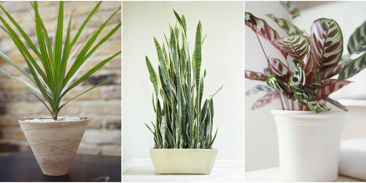 10 Houseplants That Can Survive in Even the Darkest Corner