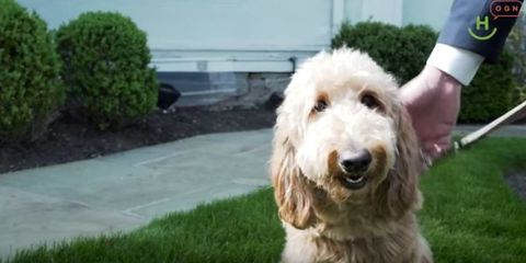 Lulu is a therapy dog at Ballard-Durand Funeral and Cremation Services