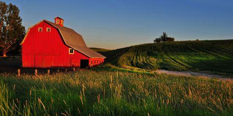 Grass, Farm, Natural landscape, Landscape, Land lot, Grassland, Field, Rural area, Plain, House,