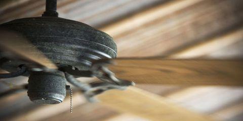 Wood, Invertebrate, Insect, Pest, Arthropod, Hardwood, Parasite, Macro photography, Wood stain, Close-up,