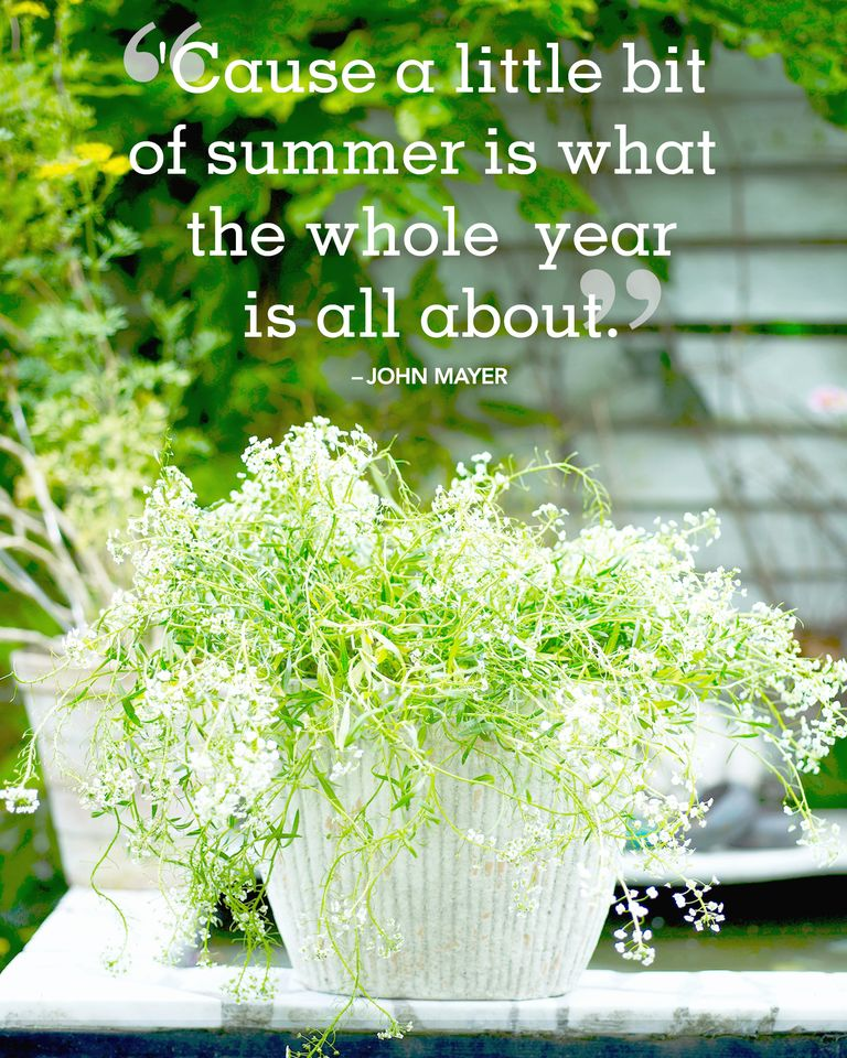 20 Best Summer Quotes And Sayings