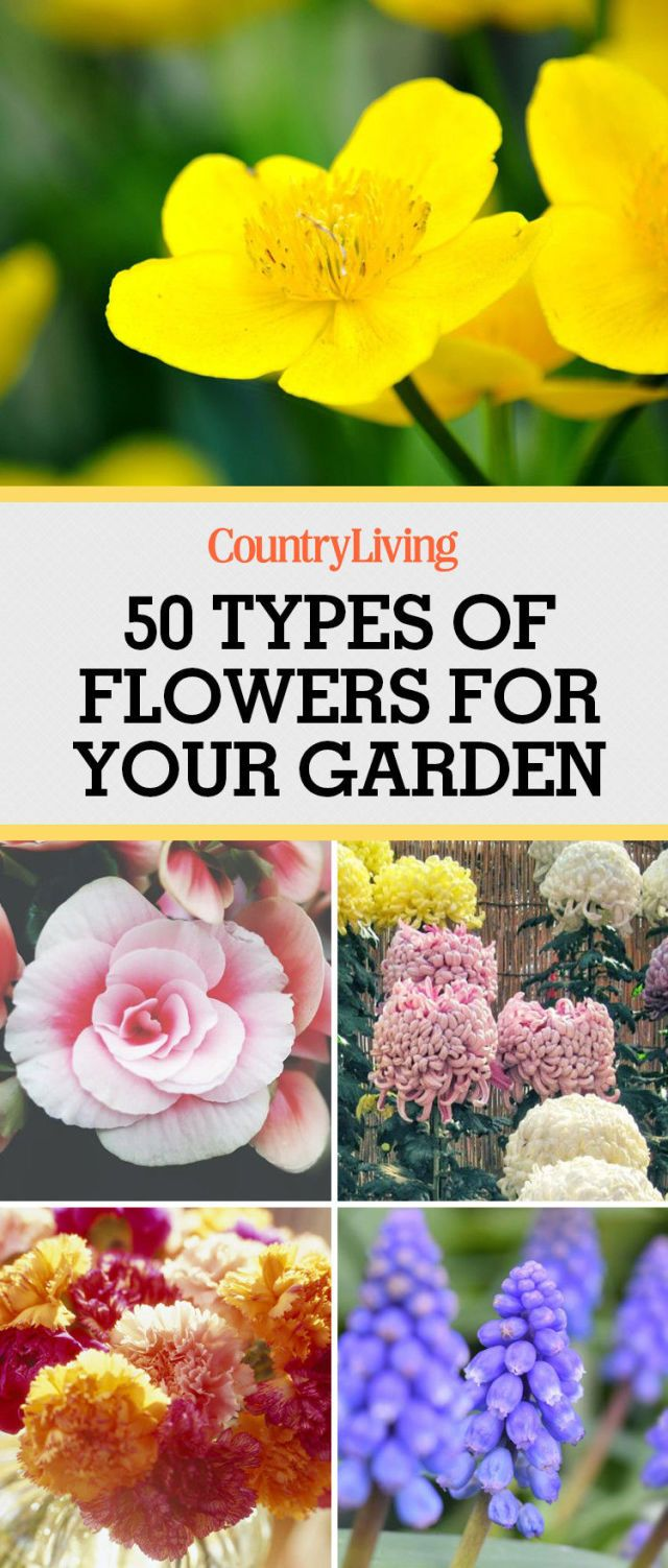 50 Types Of Flowers For Your Garden