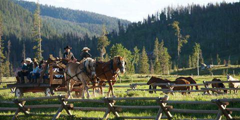 Bridle, Horse supplies, Halter, Rein, Working animal, Horse, Horse harness, Horse tack, Pack animal, Pasture,