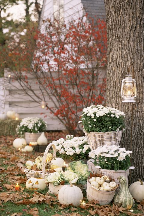 40 Best Outdoor Halloween Decoration Ideas - Easy Halloween Yard and Er Flower Garden Design Html on yard designs, vintage wallpaper designs, flower wallpaper, landscape designs, flower gardens with fountains, flower gardening, flower display, flower fences, flower coloring pages, patio designs, swimming pool designs, kitchen designs, flower background, flower desktop, flower arch, backyard designs, flower gardens for small yards, flower arrangements, flower beds, flower gardens for florida,