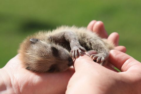 Human, Finger, Skin, Joint, Nail, People in nature, Thumb, Close-up, Paw, Fawn,