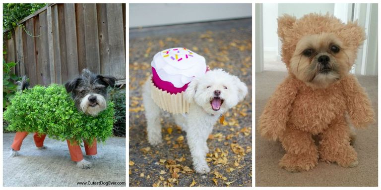 25 Cute Dog and Cat Halloween Costumes - Best Ideas for Pet ...
