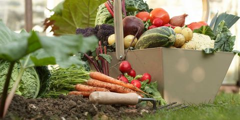 image - Fall Vegetable Garden