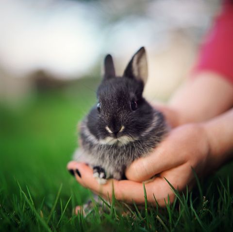 Grass, Skin, Adaptation, Rodent, Snout, Rabbit, Whiskers, Grass family, Rabbits and Hares, Terrestrial animal,