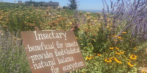 Vegetation, Plant community, Shrub, Wildflower, Groundcover, Handwriting, Meadow, Prairie, Chaparral, Herbaceous plant,