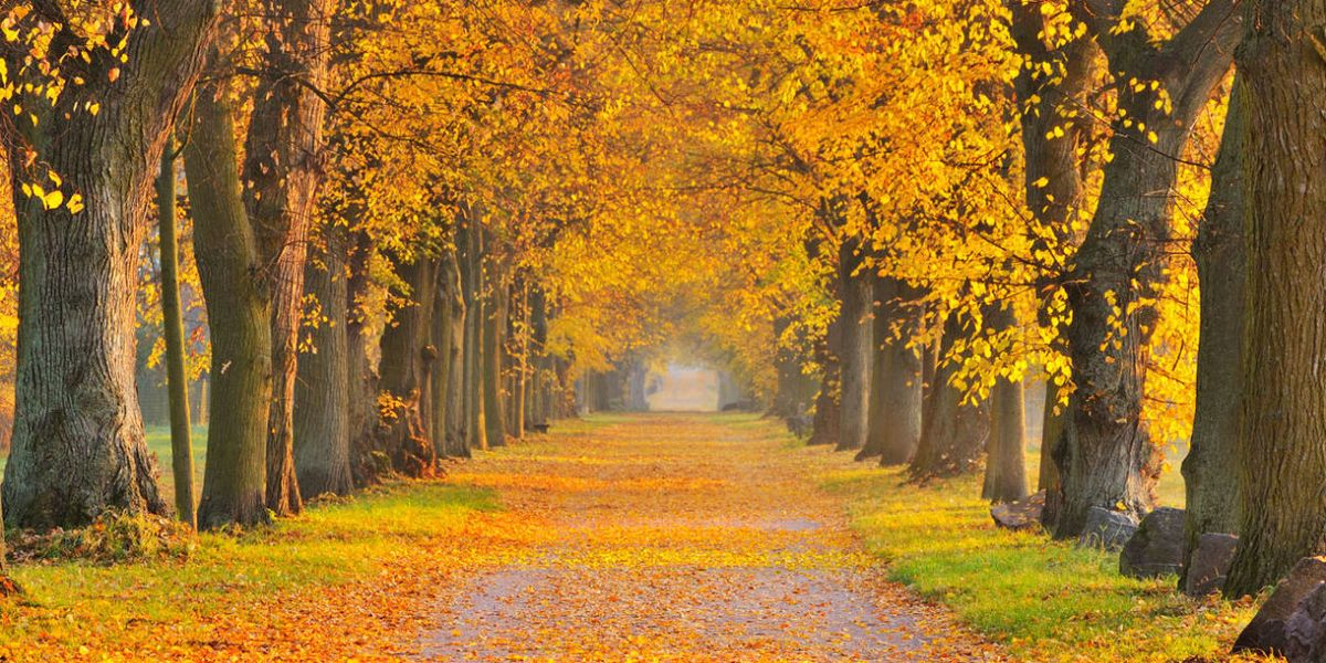 18 Magical Autumn Sensations We Can't Wait to Experience