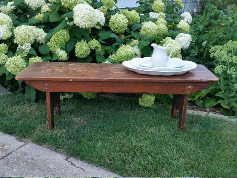 Grass, Table, Outdoor furniture, Shrub, Outdoor table, Groundcover, Street furniture, Outdoor bench, Hydrangeaceae, Annual plant,
