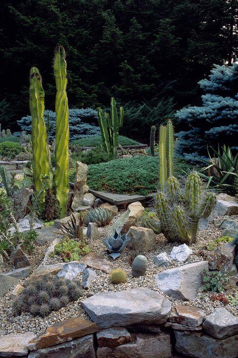 Cactus, San Pedro cactus, Vegetation, Plant, Terrestrial plant, Botany, Flower, Biome, Saguaro, Acanthocereus tetragonus,