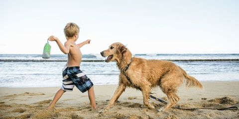 Dog breed, Fun, Coastal and oceanic landforms, Dog, Mammal, board short, Carnivore, Summer, Shore, Sporting Group,