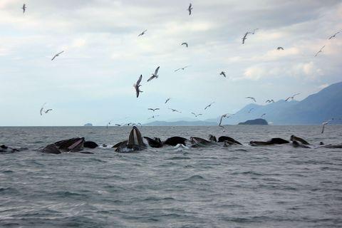 Sky, Vertebrate, Bird, Cloud, Water, Ocean, Marine mammal, Fluid, Bird migration, Animal migration,