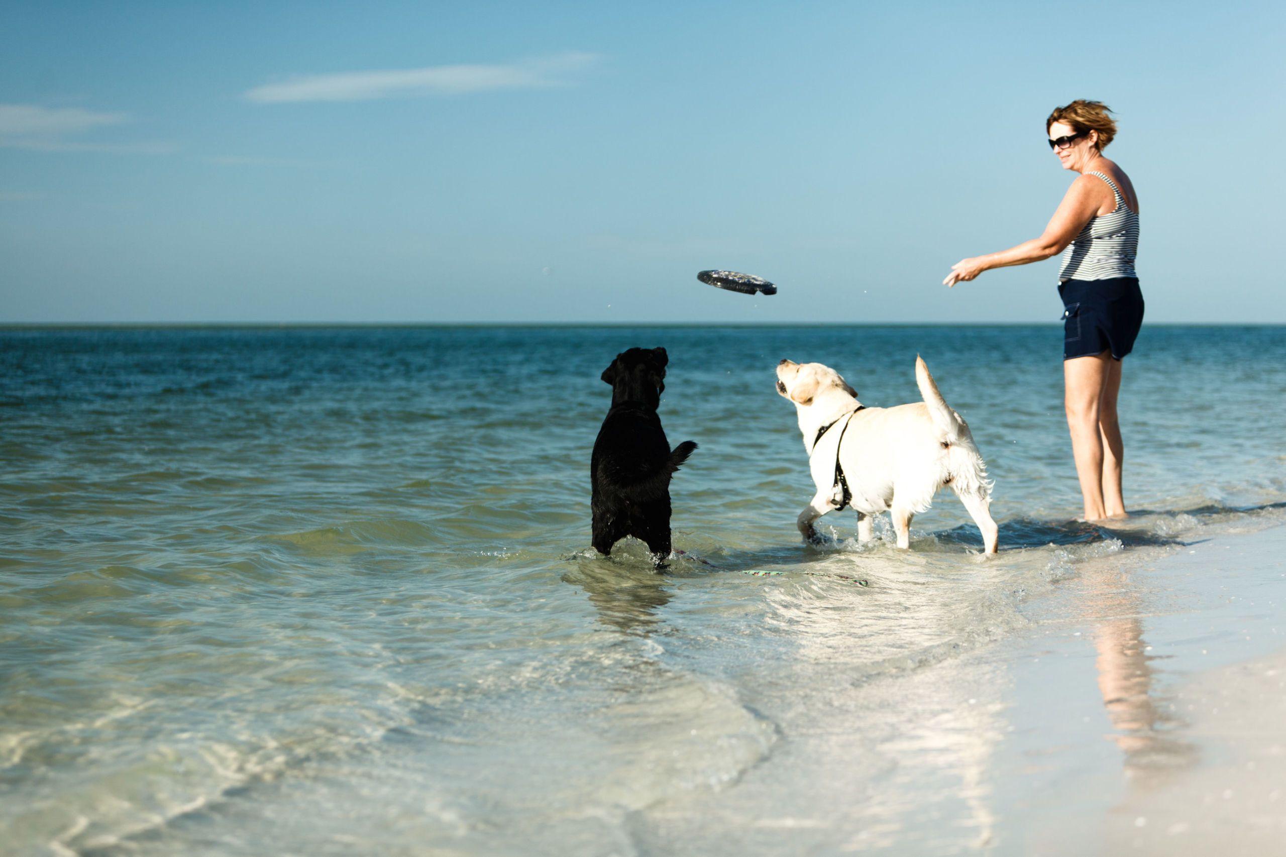 dog friendly beaches galveston
