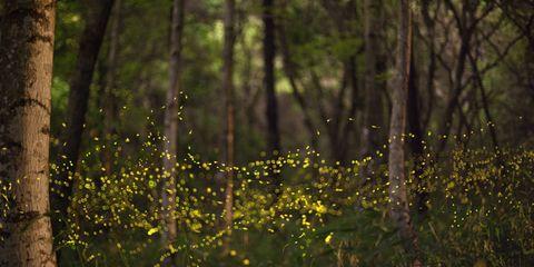 Vegetation, Nature, Natural environment, Plant community, Natural landscape, Sunlight, Forest, Nature reserve, Terrestrial plant, Biome,