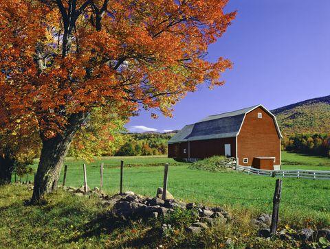 Branch, Plant, Natural landscape, Leaf, Landscape, Pasture, Tree, Land lot, Deciduous, House,