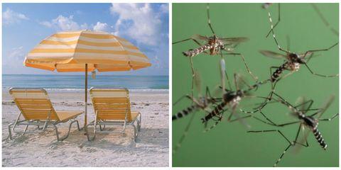 Organism, Invertebrate, Pest, Twig, Arthropod, Insect, Umbrella, Shade, Outdoor furniture, Beach,