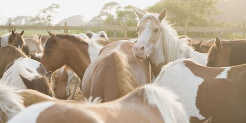 Brown, Horse, Working animal, Herd, Rural area, Ranch, Sorrel, Terrestrial animal, Livestock, Stallion,