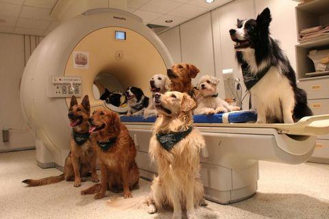 Dogs in scientific study