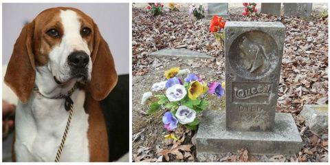 Petal, Dog breed, Dog, Flower, Carnivore, Collar, Lavender, Headstone, Cut flowers, Companion dog,