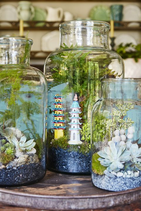 Organism, Glass, Food storage containers, Mason jar, Aquarium decor, Fish supply, Freshwater aquarium, Pet supply, Fish, Annual plant,