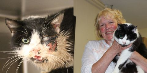 Human, Vertebrate, Skin, Whiskers, Small to medium-sized cats, Organism, Felidae, Carnivore, Cat, Mammal,