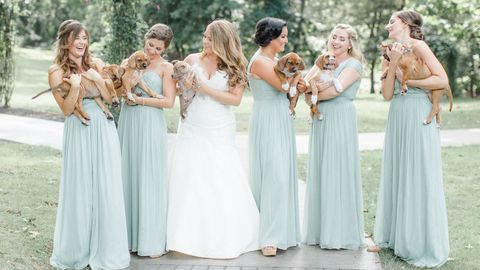dog wedding ideas bridal party