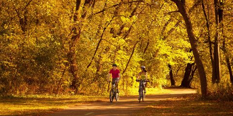 Deciduous, Tree, Leaf, Bicycle wheel, Bicycle, People in nature, Sunlight, Woody plant, Bicycle frame, Forest,