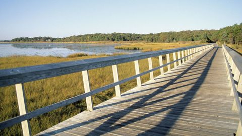Natural landscape, Bank, Walkway, Nature reserve, Guard rail, Channel, Boardwalk, Reservoir, Bridge, Fluvial landforms of streams,