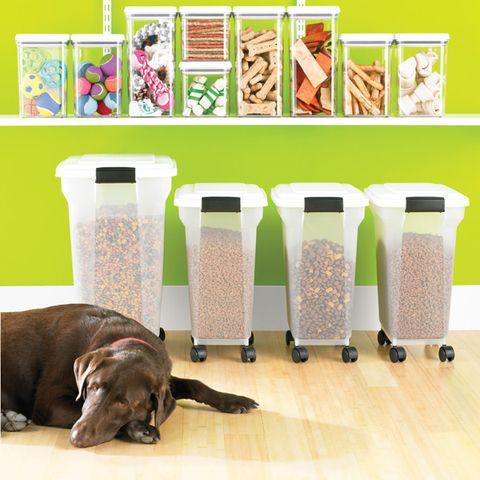 Dog breed, Floor, Dog, Flooring, Carnivore, Liver, Pet supply, Sporting Group, Companion dog, Working animal,