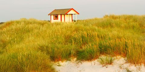 Grass, Natural environment, Natural landscape, Grassland, Ecoregion, Plain, Rural area, House, Grass family, Roof,
