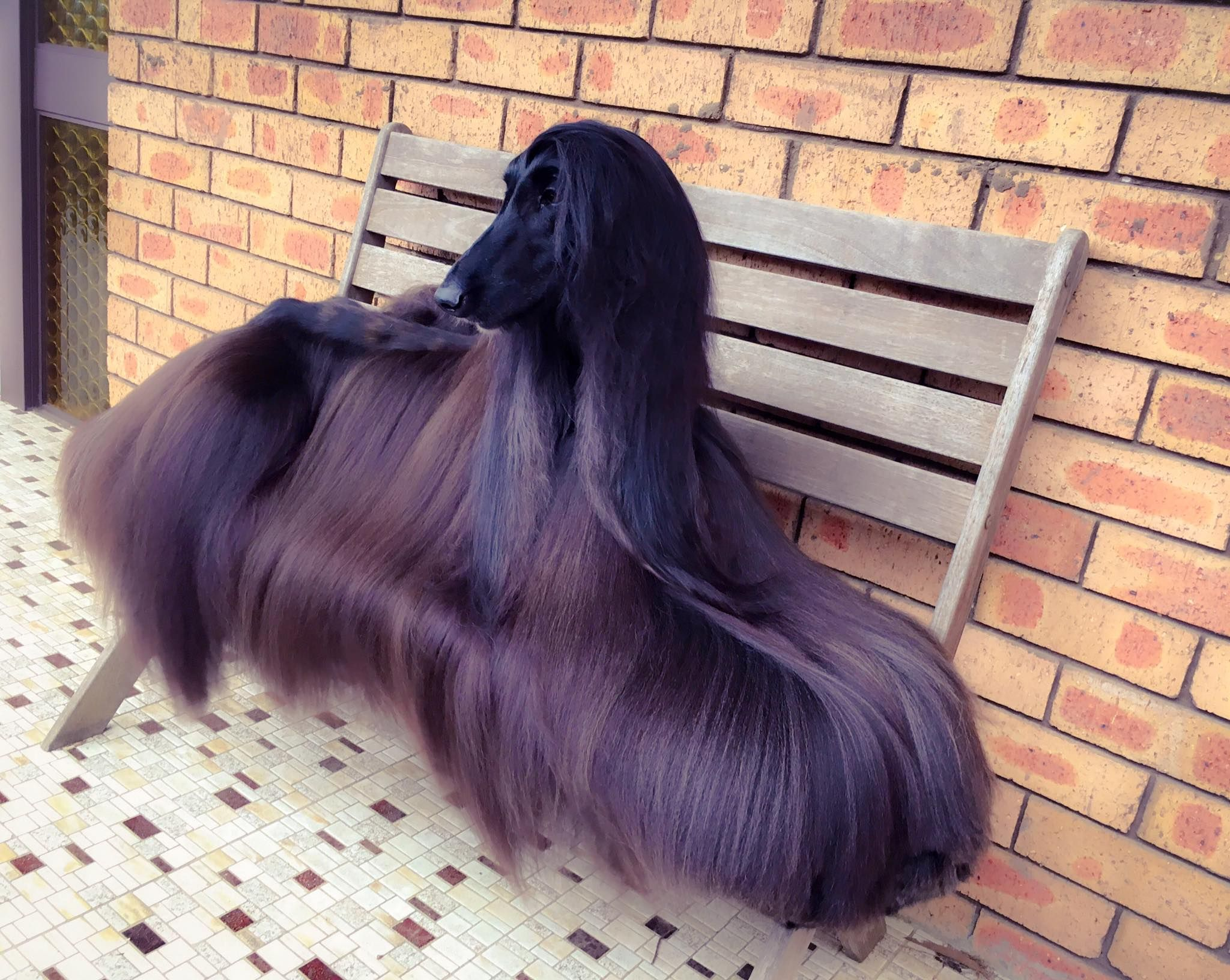 This Might Be The Most Beautiful Dog We Ve Ever Seen