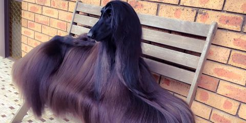 Brick, Purple, Brickwork, Violet, Lavender, Grey, Dog breed, Fur, Natural material, Long hair,