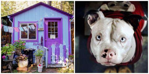 Flowerpot, Photograph, Purple, Dog, House, Snout, Carnivore, Violet, Door, Lavender,