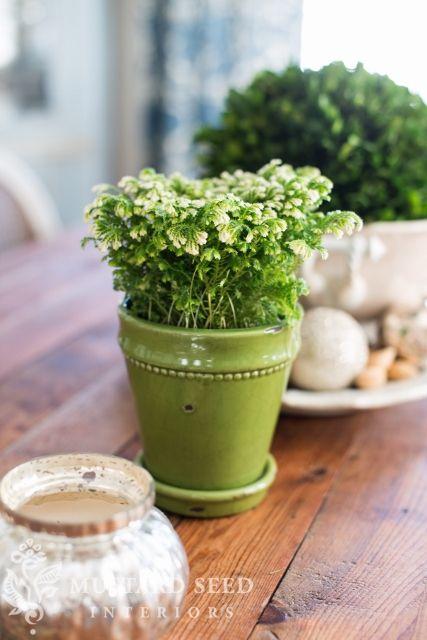 frosty fern christmas plant