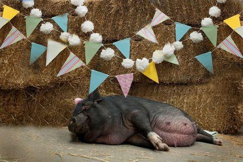 Vertebrate, Adaptation, Terrestrial animal, Snout, Zoo, Wrinkle,