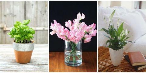 Flowerpot, Petal, Plant, Flower, Interior design, Flowering plant, Bouquet, Artifact, Vase, Cut flowers,