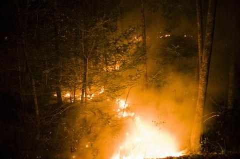 Vegetation, Natural environment, Night, Atmosphere, Wildfire, Fire, Pollution, Heat, Amber, Atmospheric phenomenon,