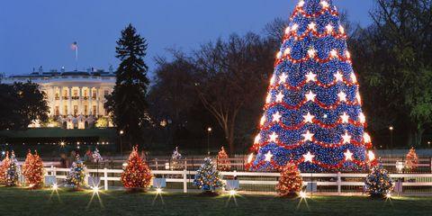 Lighting, Event, Christmas decoration, Tree, Christmas tree, Winter, Christmas eve, Holiday, Christmas lights, Woody plant,