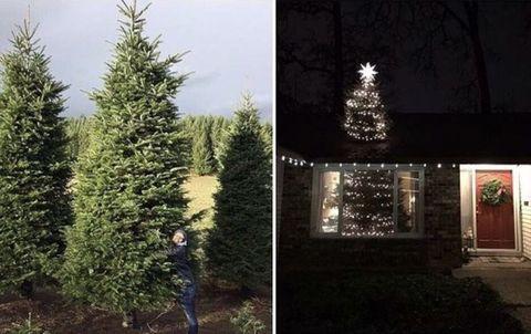 Woody plant, Christmas decoration, Evergreen, Christmas tree, Shrub, Christmas lights, Door, Pine family, Midnight, Larch,