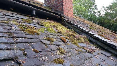 Roof, Wall, Brick, Cobblestone, Composite material, Non-vascular land plant, Brickwork, Building material, Moss, Flagstone,