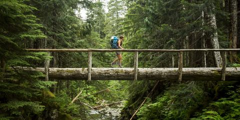 hiker in Olympic National Park