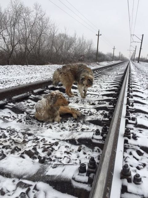 Winter, Freezing, Overhead power line, Snow, Track, Carnivore, Electrical network, Electricity, Dog, Dog breed,